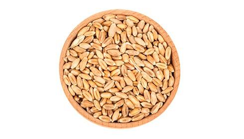 Wheat Protein Benefits