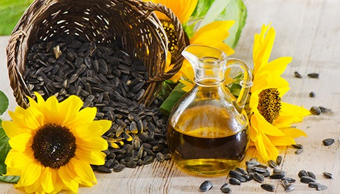 What it Sunflower Oil?