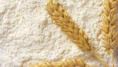 What is Wheat Protein?
